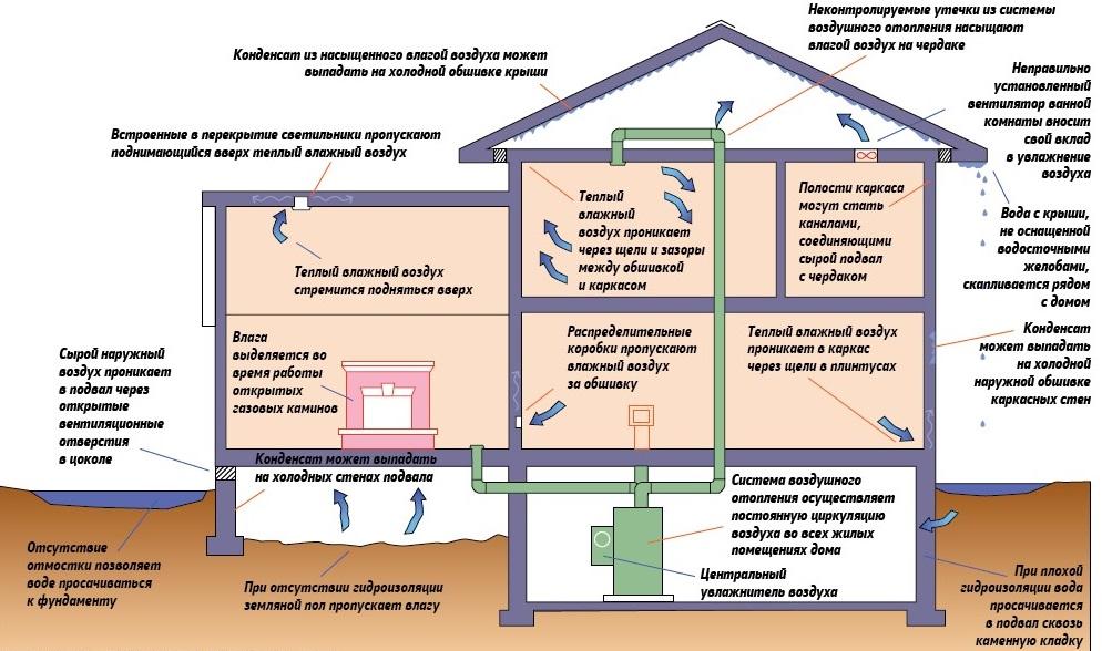 Причины возникновения грибка в доме