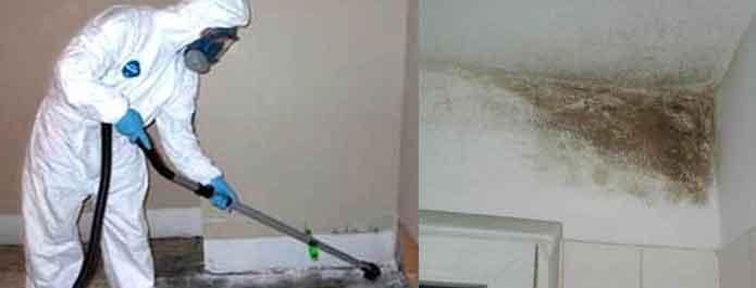 Удаление грибка в помещениях
